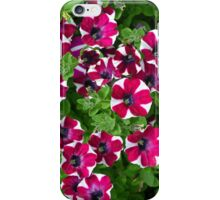 Red and white petunias iPhone Case/Skin