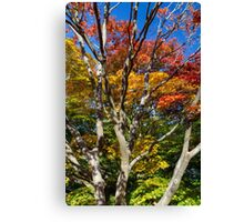 Japanese Maple Foliage at Queen Elizabeth Park Canvas Print