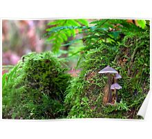 Mushroom Trio Poster