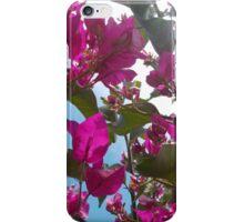 Bougainvillea Sky iPhone Case/Skin