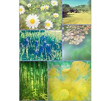 Floral Collage Aster Muscari Waterlily Bamboo Daffodil Park Photographic Print