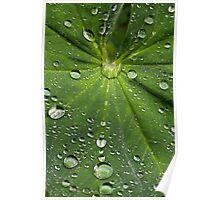 Lady's Mantle Leaf Poster