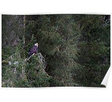 Fraser Valley Bald Eagle Festival Poster