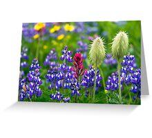Wildflowers at Mount Rainier Greeting Card
