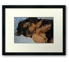 Cute Puppy Sleeping Framed Print