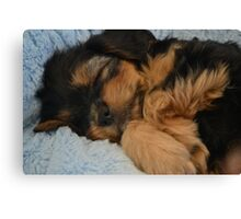 Cute Puppy Sleeping Canvas Print