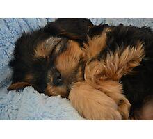 Cute Puppy Sleeping Photographic Print