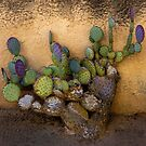 Mission Cacti by Larry Costales