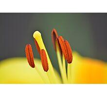 Stamen Photographic Print