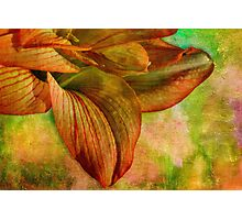 Sunny amaryllis on canvas Photographic Print