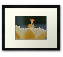 Macro Stamen Hibiscus Framed Print