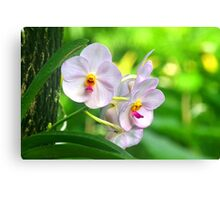 Anthropomorphic Aardvark Orchid Canvas Print