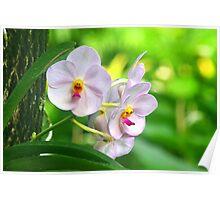 Anthropomorphic Aardvark Orchid Poster