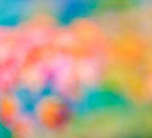 colors from autumn by Marcel Derweduwen
