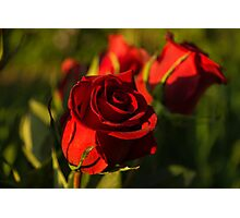 Ruby Red Birthday Roses  Photographic Print