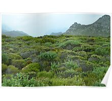 Hangklip Mountain and shrubbery (fynbos) Poster