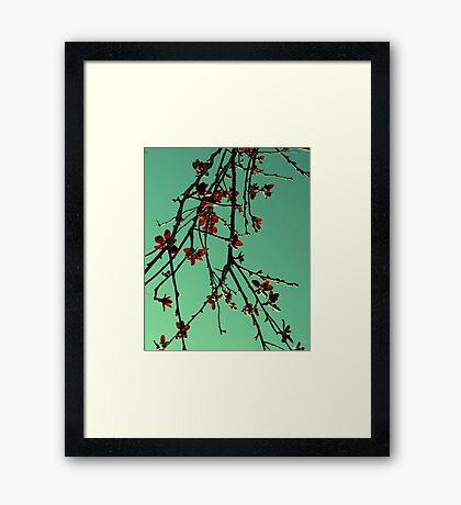 Orientique Framed Print