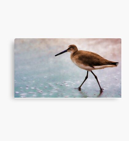 -Beachcomber Canvas Print