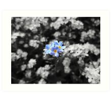 Blue Forget-Me-Nots in SC Art Print
