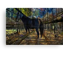 HORSE in the forest Canvas Print