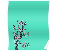 Arizona iced tea cherry blossom Poster