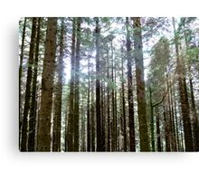 Highland Forest Scotland Canvas Print
