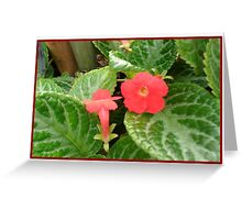 Red Flower Card 4 Greeting Card