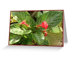 Red Flower 5 Greeting Card