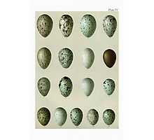 Bird's Eggs Photographic Print