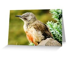 A Bird in KZN, South Africa Greeting Card