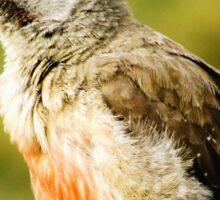 A Bird in KZN, South Africa Sticker