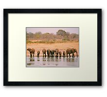 A Herd of Elephants in Zimbabwe Framed Print