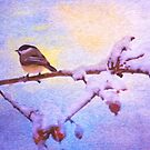 Black Cap Chickadee Winter Twilight by daphsam