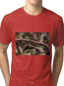 Stick insect Phasme story 11   (c)(t) by Olao-Olavia / Okaio Créations fz 1000 Tri-blend T-Shirt