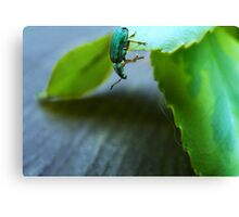 Curious Insect Canvas Print