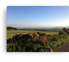 Aberdeenshire countryside... and look a dog! Canvas Print