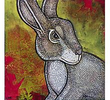 Mad March Hare Photographic Print