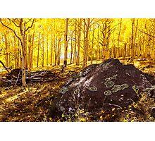 Aspen Forest Utah Photographic Print