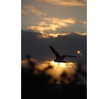 Seagull Against the Sunset, Bathers Beach, Fremantle, WA Photographic Print