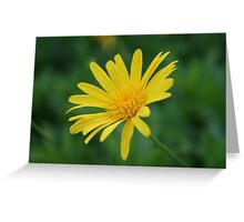 Yellow Daisy Flower Greeting Card