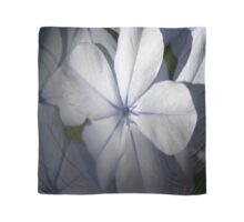 Pale Blue Plumbago Flower Close Up Scarf