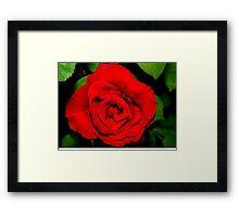 Star-shaped rose Framed Print