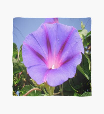 Purple Colored Morning Glory Flower Garden Background  Scarf