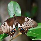 Moth 1 by Josette Halls