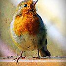 Robin Red Breast by Lynn Bolt