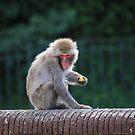 Snow Monkey Feeding by daphsam