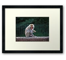 Snow Monkey Feeding Framed Print
