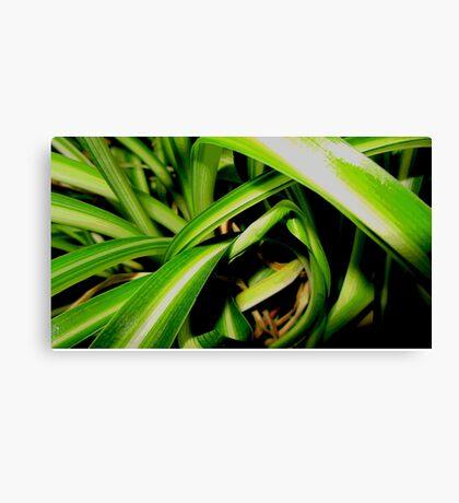 Close up jungle Canvas Print
