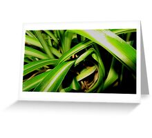 Close up jungle Greeting Card