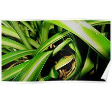 Close up jungle Poster